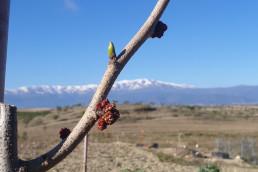 Peter brotado y Sierra Nevada de fondo