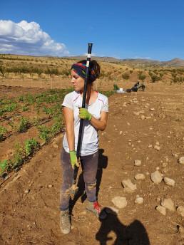Plantación vivero de cornicabras 2020
